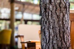 zamyka w górę drzewnego bagażnika Fotografia Stock