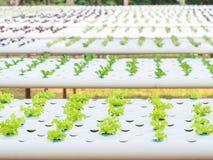 Zamyka w górę flancowanie hydroponika rośliny obraz royalty free