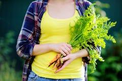 Zamyka w górę fotografii świeże życiorys organicznie marchewki w dziewczyny ` s ręce Obraz Stock