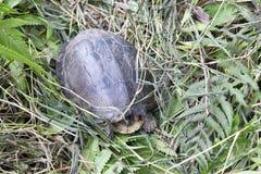 Zamyka w górę fotografii żółw zdjęcie stock