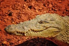 Zamyka w górę fotografii zęby Nile krokodyl i usta Ja jest portretem głowa IIt jest przyrody fotografią Nil krokodyl wewnątrz fotografia stock
