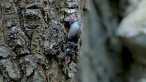 Zamyka w górę insektów na drzewie zdjęcie wideo