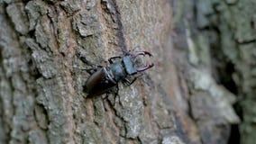 Zamyka w górę insektów na drzewie zbiory