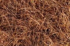 Zamyka w górę jedlinowych igieł w spadku w lasowej tło tekstury tapecie obraz royalty free