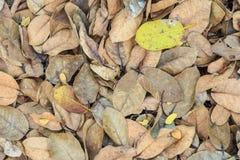 Jesień kolorowi liście Zdjęcie Royalty Free