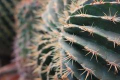 Zamyka w górę kaktusa w pustynny kształtować teren Zdjęcie Royalty Free