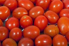 Zamyka w górę kolekci Jaskrawi Czerwoni Czereśniowi pomidory Fotografia Stock