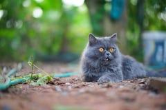 Zamyka w górę kot Selekcyjnej ostrości obraz royalty free