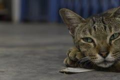 Zamyka w górę kota relaksującego zegaru Zdjęcie Royalty Free