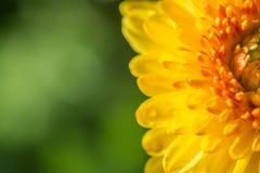 zamyka w górę kwiatu abstrakta tła Zdjęcia Royalty Free