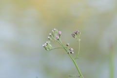 Zamyka w górę kwiatu tła Fotografia Royalty Free
