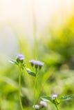 Zamyka w górę kwiatu tła Obraz Royalty Free