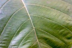 Zamyka w górę liścia tła Zdjęcia Stock