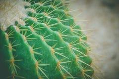 Zamyka w górę lufowego kaktusa i długiego ciernia przy jawnym parkiem w rocznika stylu Zdjęcie Royalty Free