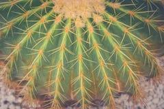 Zamyka w górę lufowego kaktusa i długiego ciernia przy jawnym parkiem w rocznika stylu Fotografia Royalty Free