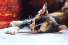 Zamyka w górę małego kota dosypiania Obraz Royalty Free