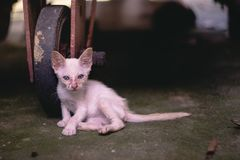 Zamyka w górę małej chuderlawej bieda bezpański figlarki lub kota fotografia stock