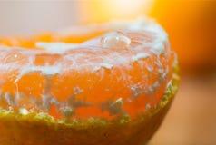 Zamyka w górę makro- obranej świeżej pomarańczowej owoc z sokiem nadchodzącym za pomarańczowych brajach od obraz stock