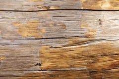 Drzewnego bagażnika zakończenie Up Fotografia Stock