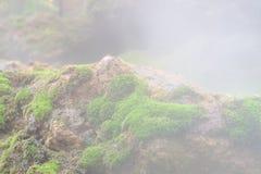 Zamyka w górę makro- strzału piękni zdrowi greenmoss narastający w górę skały na mgłowym dniu na Zielony natury tapety t zdjęcie stock