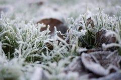 Zamyka w górę Makro- wizerunku lodowi kryształy na zamarzniętych traw ostrzach, liściach w zimie i zdjęcie royalty free