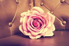 Zamyka w górę menchii róży na złotym tle zdjęcia royalty free