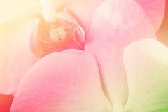 Zamyka w górę miękkiego storczykowego kwiatu w pastelu filtrującym Obraz Stock