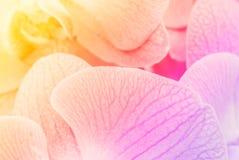 Zamyka w górę miękkiej orchidei Obrazy Stock