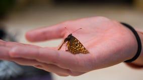 Zamyka w górę motyla na kobiety ręce Obraz Stock