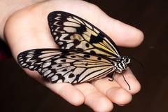 Zamyka w górę motyla na kobiety ręce Piękno natura zdjęcia stock