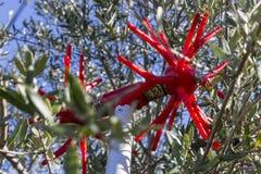 Zamyka w górę narzędzia dla podnosić oliwki w Crete zdjęcia royalty free