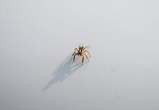 Zamyka w górę pająka na białym tle zdjęcie stock