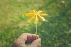 Zamyka w górę pięknego żółtego kwiatu w ręce z zieloną trawą w tle Fotografia Royalty Free