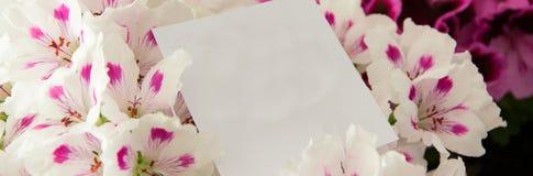 Zamyka W górę pięknych świeżych kwiatów z kartką z pozdrowieniami dla matka dnia, gratefulness teraźniejszy fotografia royalty free