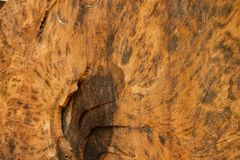 Zamyka w górę piłującego drzewnego fiszorka zdjęcie stock