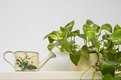 Zamyka w górę podlewanie puszki z zieloną rośliną w garnku Zdjęcia Royalty Free