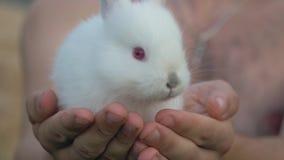 Zamyka W górę ręk Trzyma Troszkę lisiątko Białego Puszystego królika zbiory wideo