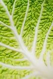 Zamyka w górę savoy liścia Fotografia Stock