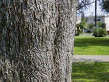 Zamyka w górę strzału ot drzewnego bagażnika Obraz Royalty Free
