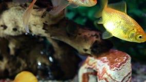 Zamyka w górę strzału rybi zbiornik zbiory