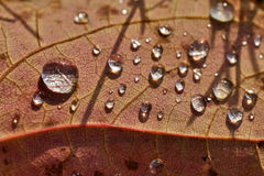 Zamyka w górę super makro- strzał wody kropli na liściu i kwiacie Fotografia Royalty Free