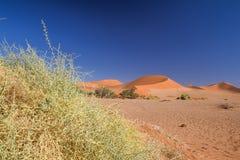 Zamyka w górę szczegółu nieżywi trawa krzaki w Sossusvlei blisko Sesriem w Namib pustyni w Namibia, Afryka Zdjęcie Stock