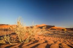 Zamyka w górę szczegółu nieżywi trawa krzaki w Sossusvlei blisko Sesriem w Namib pustyni w Namibia, Afryka Zdjęcia Stock