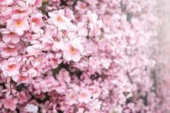 Zamyka w górę sztucznego Sakura kwiatu w japońskim stylu Obrazy Stock