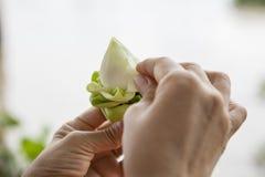 Zamyka w górę tajlandzkiej kultury ręki robi dekoraci na białego lotosu przepływie Zdjęcia Royalty Free