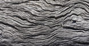 Zamyka w górę tekstury spadać Australijski gumowy drzewo z w zawiły sposób wyplatającymi falistymi wzorami fotografia stock
