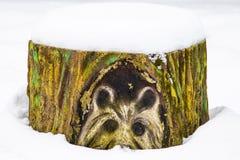 Zamyka w górę tekstury zbliżenie stary malujący fiszorek w śniegu obraz royalty free