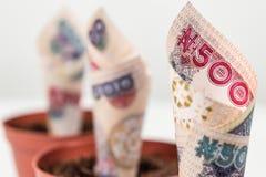 Zamyka w górę trzy banknotów Nigeryjskiego pieniądze Pięćset naira notatek w kwiatów garnkach dla pieniężnej inwestycji i oszczęd fotografia stock