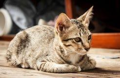 Zamyka w górę twarzy przybłąkany kot na drewnianej podłoga Obraz Stock
