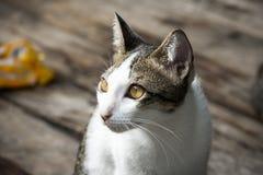Zamyka w górę twarzy przybłąkany kot na drewnianej podłoga Zdjęcia Stock